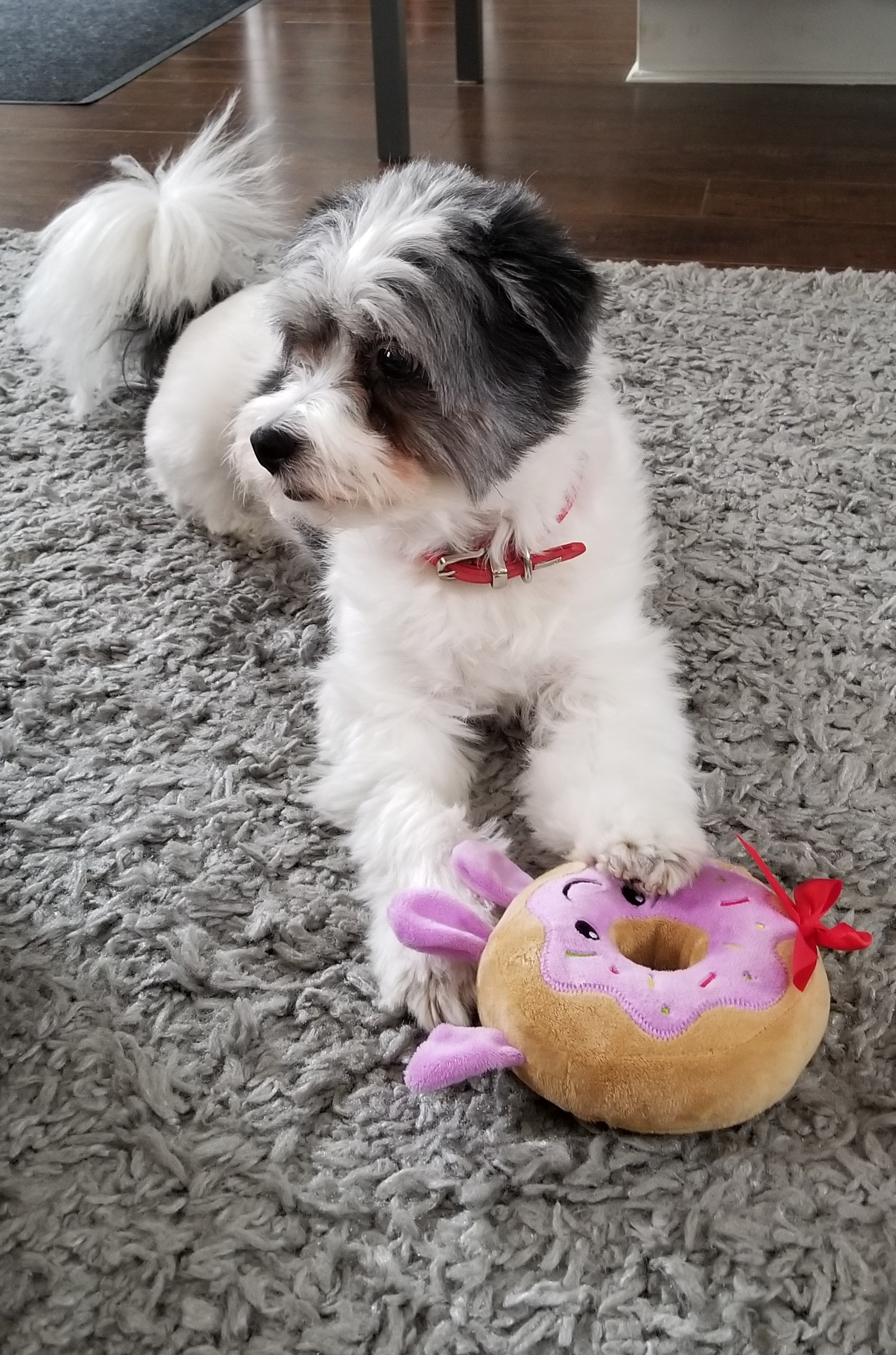 Bently & his donut